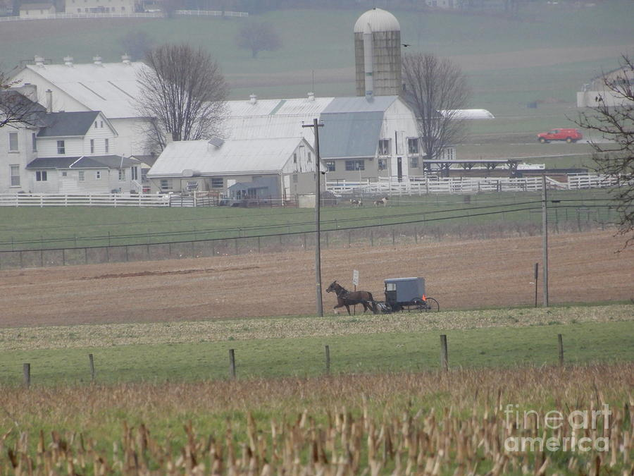 Amish Photograph - A Tranquil Spring Pause by Christine Clark