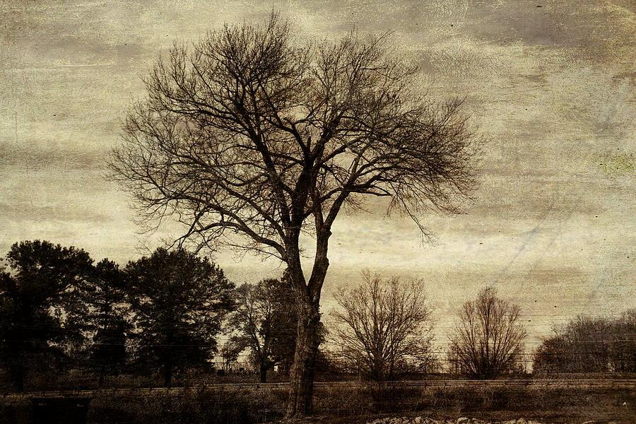 Tree Photograph - A Tree Along The Roadside by David Yocum