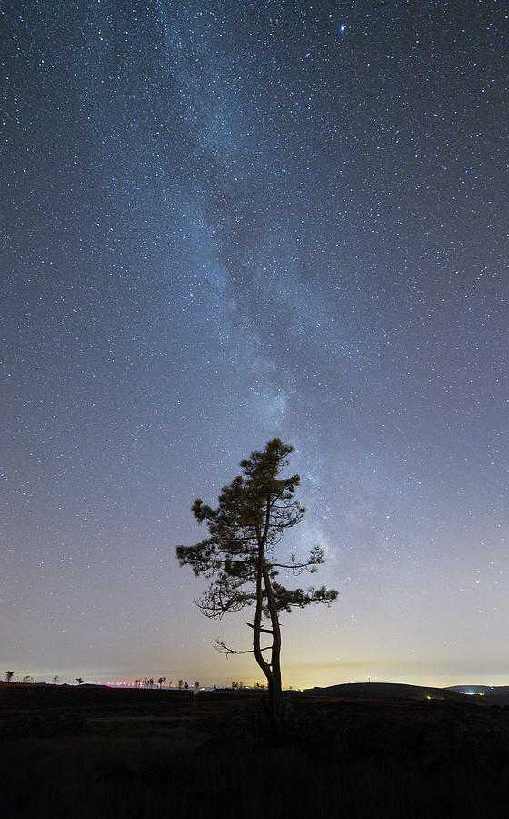 A Tree Photograph by Bruno Rosa