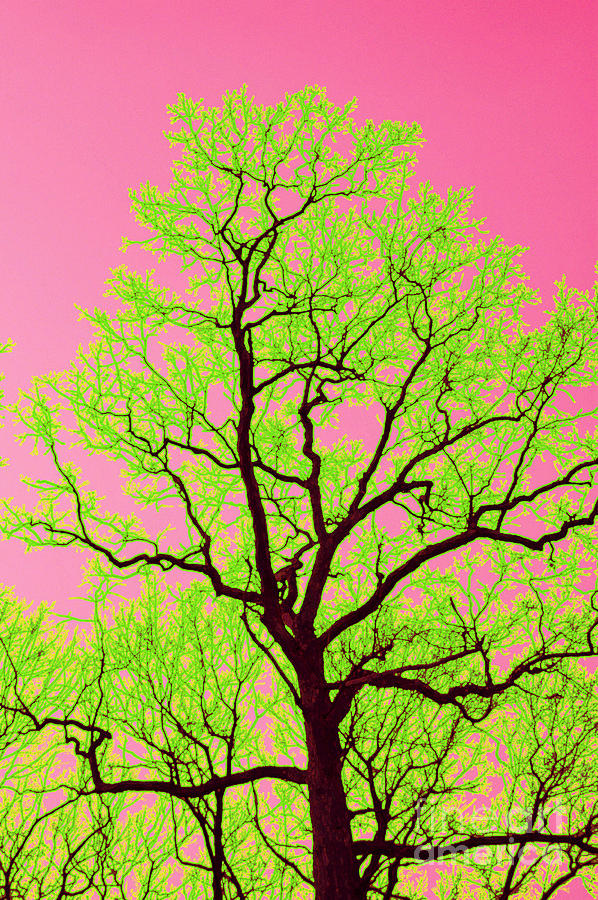 Lime Green Photograph - A Tree Grows In Vegas by Valerie Fuqua