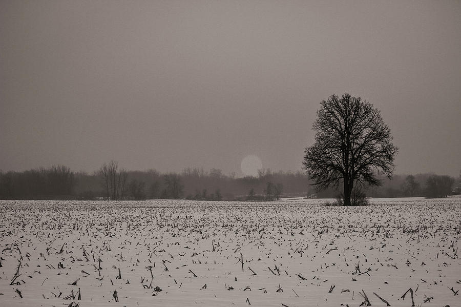 Meadow Photograph - A tree in an open field by Maxwell Dziku