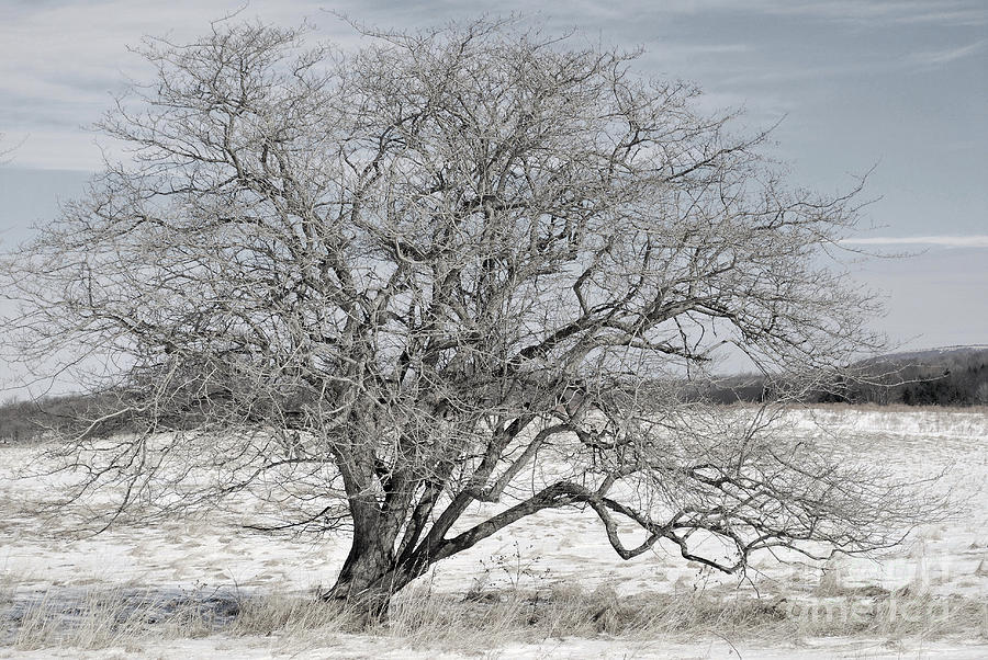 Tucker County Photograph - A Tree In Canaan by Randy Bodkins