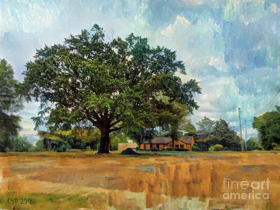 A Tree on Church Street by Jane Spaulding