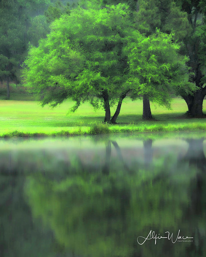 Landscape Photograph - A Tree Reflected by Alfie Wace