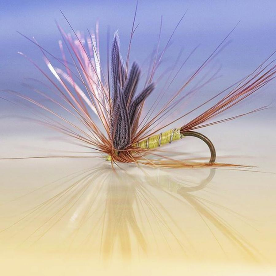 Flyfishing Photograph - A Trout Fly (greenwells Glory) by John Edwards