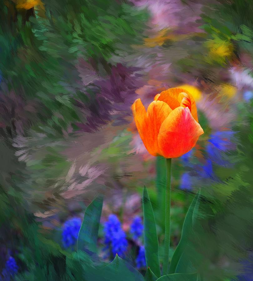 Floral Digital Art - A Tulip Stands Alone by David Lane