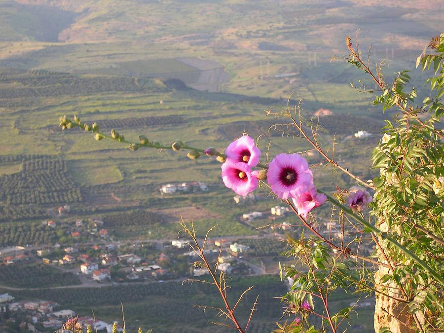Flowers Photograph - A View From Mt. Arbel by Susan Heller