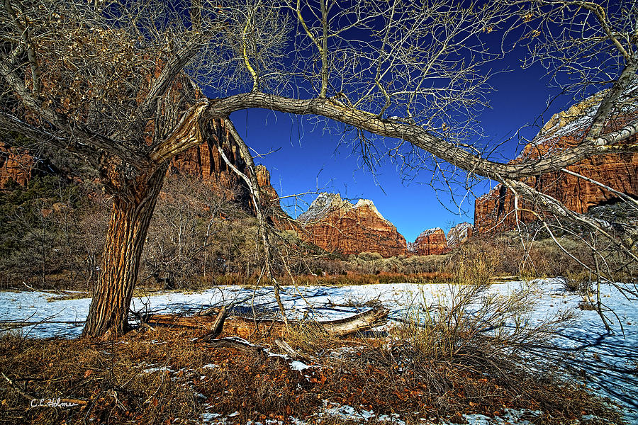Zion Canyon Photograph - A View In Zion by Christopher Holmes