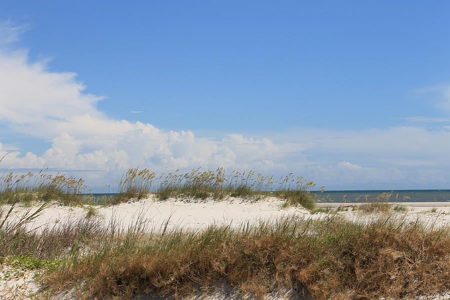 Beach Photograph - A View Of The Dunes by Laura Martin