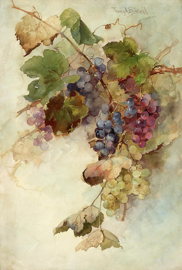 Vine Painting - A vine of grapes by Franz Arthur Bischoff