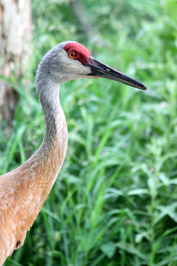 Crane Photograph - A Visage Of Nature by Mark  France