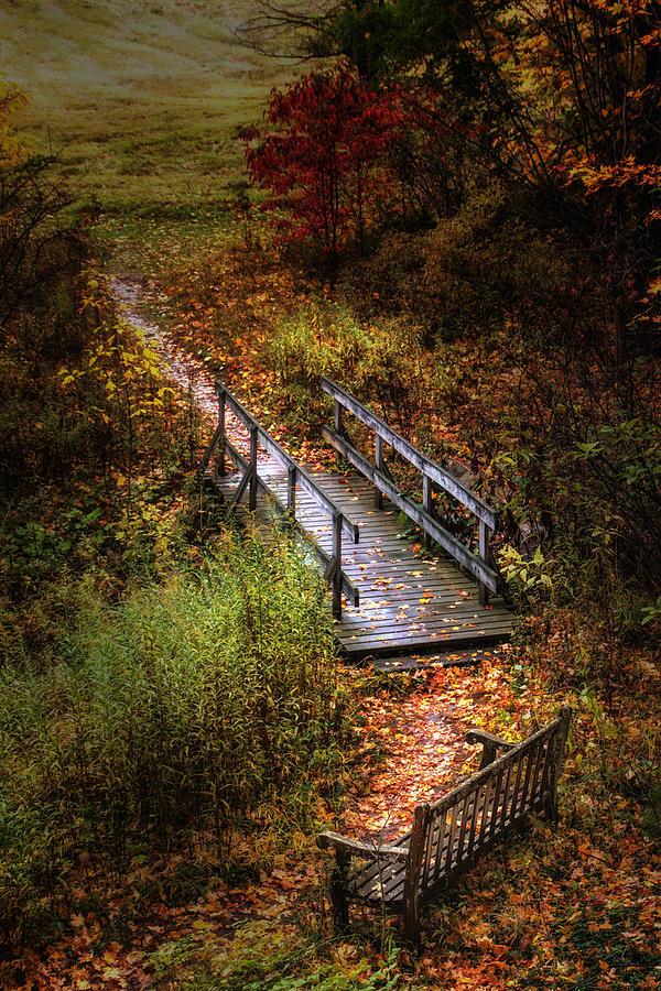 Arboretum Photograph - A Walk In The Park II by Tom Mc Nemar
