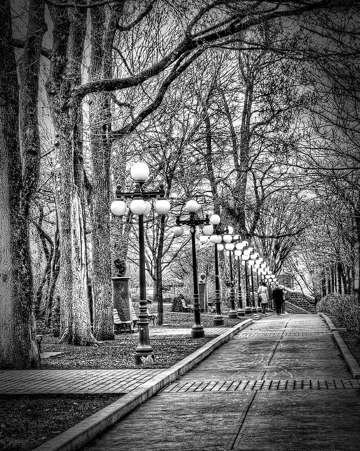 Mono Photograph - A Walk In The Park by Stan Lipski