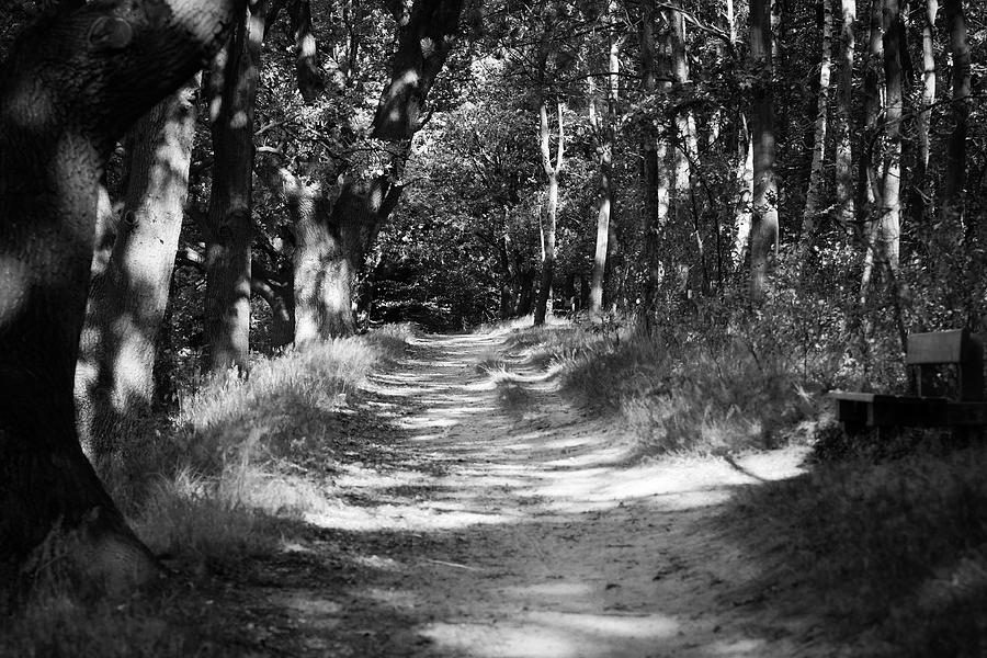 Deutschland Photograph - A Walk In The Woods by Edward Myers