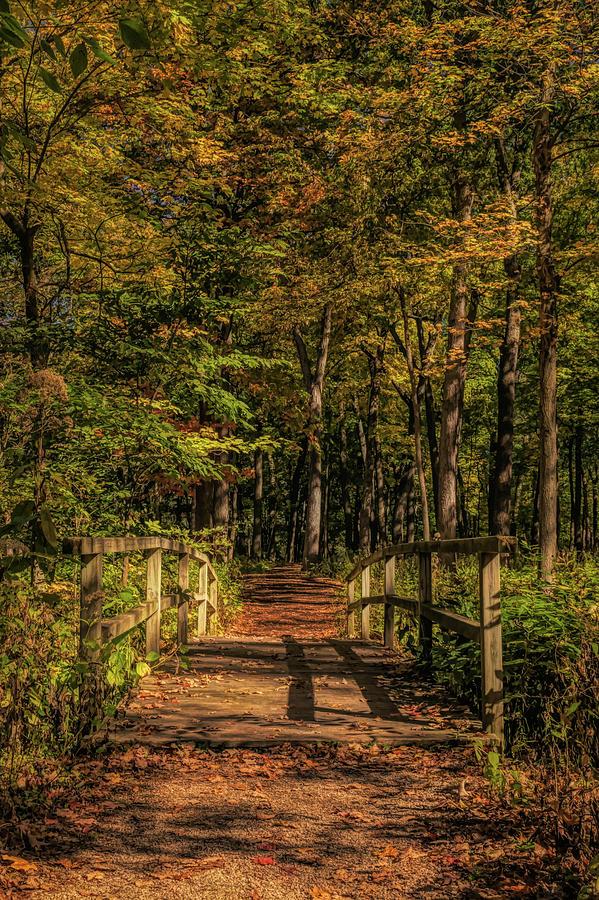 A Walk In The Woods by Ken Mickel
