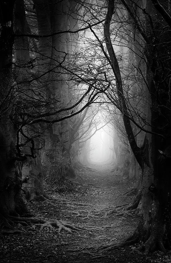 Foggy Photograph - A Walk In The Woods by Simon Garratt