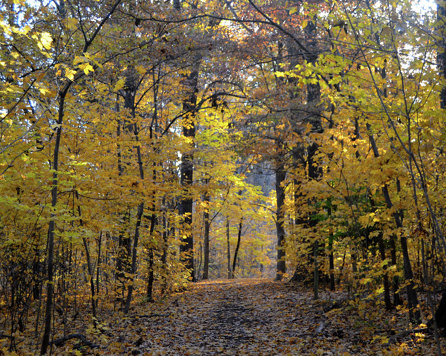 Fall Leaves Photograph - A Walk In The Woods by Sue Houston