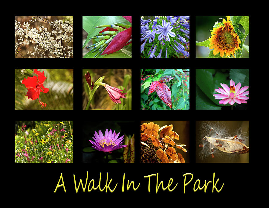 A Walk In The Park by Carolyn Marshall