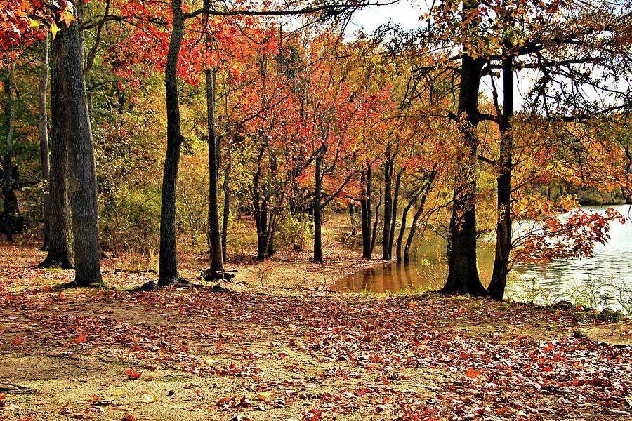 A Walk Through Autumn  by John Lewis