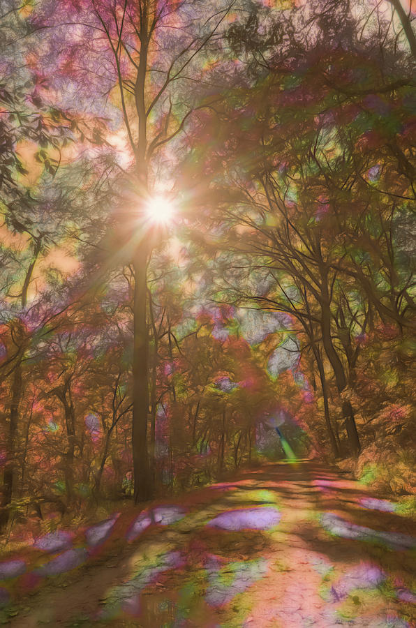 A Walk Through the Rainbow Forest by Beth Sawickie