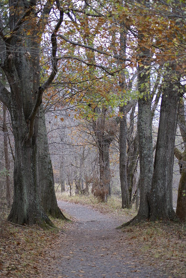 Trail Photograph - A walk to remember by Heidi Poulin