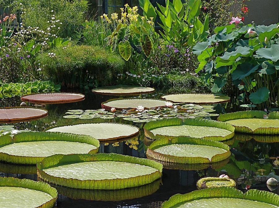 Water Garden Photograph - A Water Garden by Byron Varvarigos