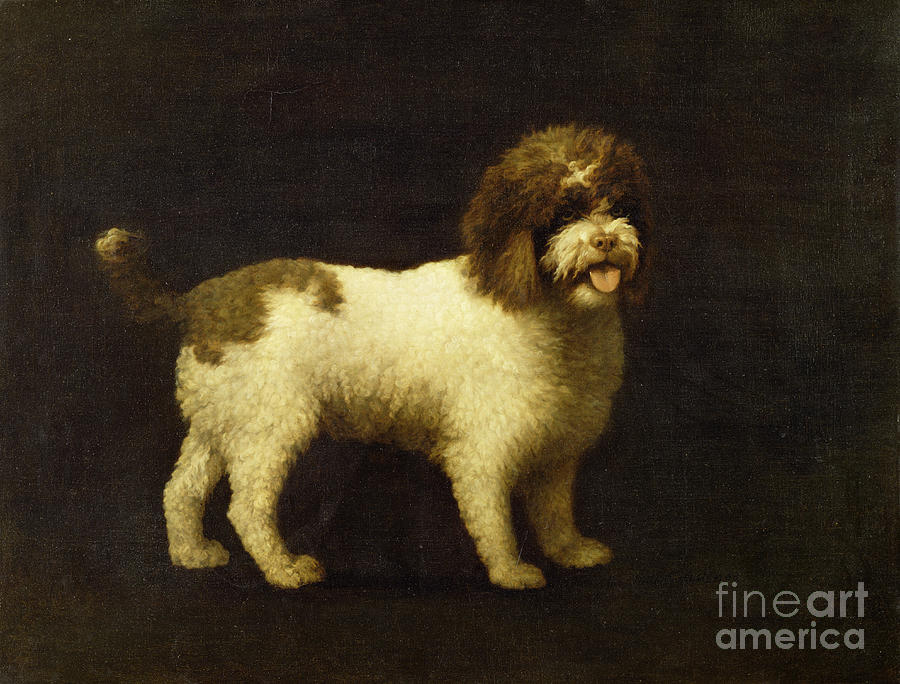 Water Painting - A Water Spaniel by George Stubbs