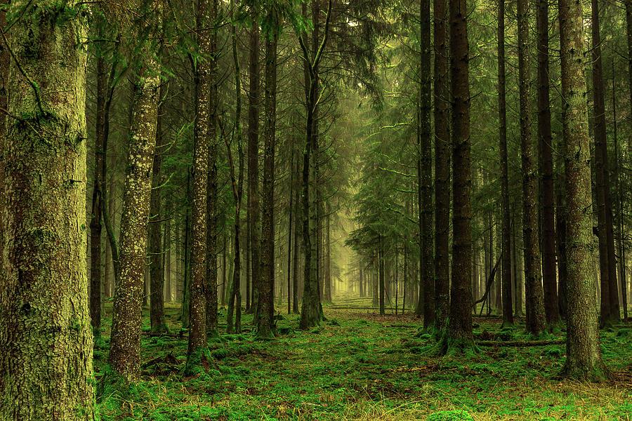 A Way Through The Woods by KaFra Art