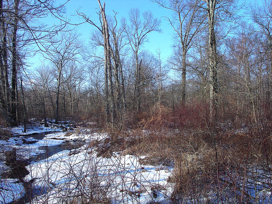 Landscape Photograph - A Welcome Thaw In January by Terrance DePietro