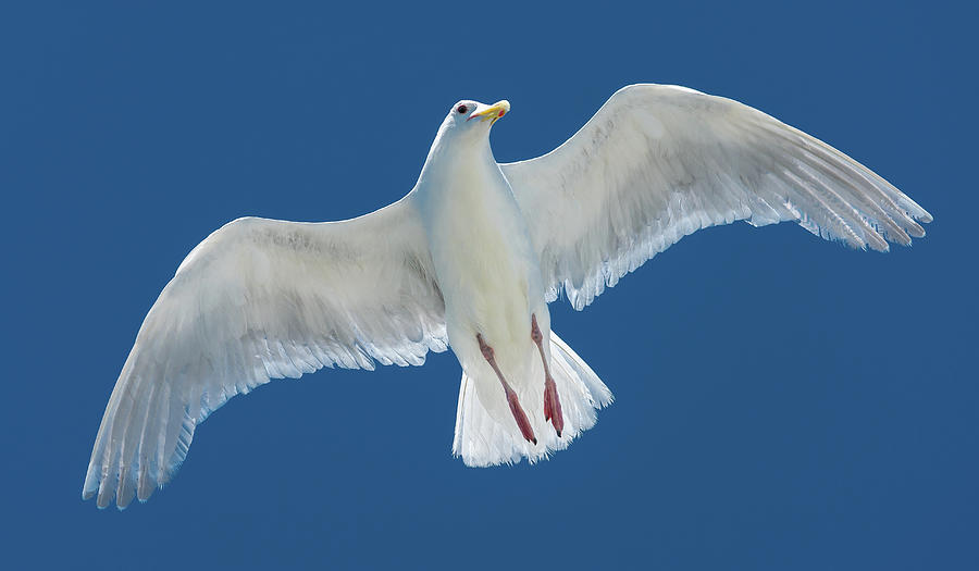 A White Gull Flying In Sky Photograph