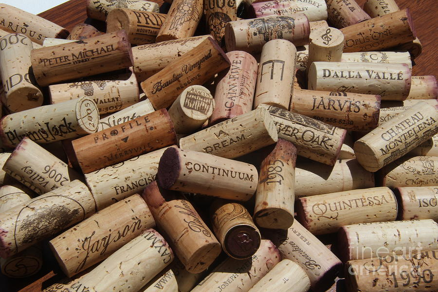 Wine Cellar Photograph - A Wine Lovers Dream by Anthony Jones
