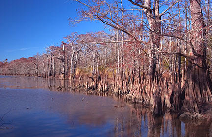 Nature Photograph - A Winter Day In The Swamp by Kelley Swinney