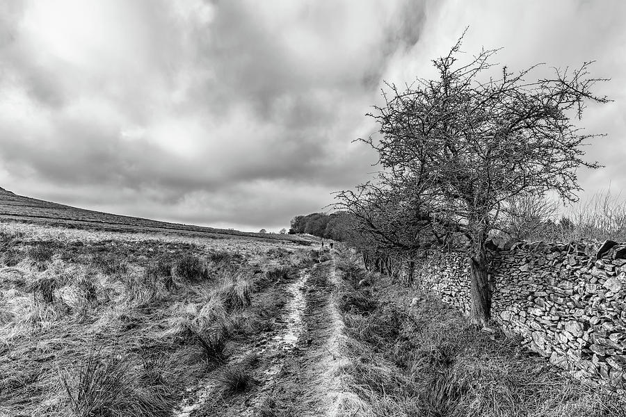 Winter Photograph - A Winter Track by Nick Bywater