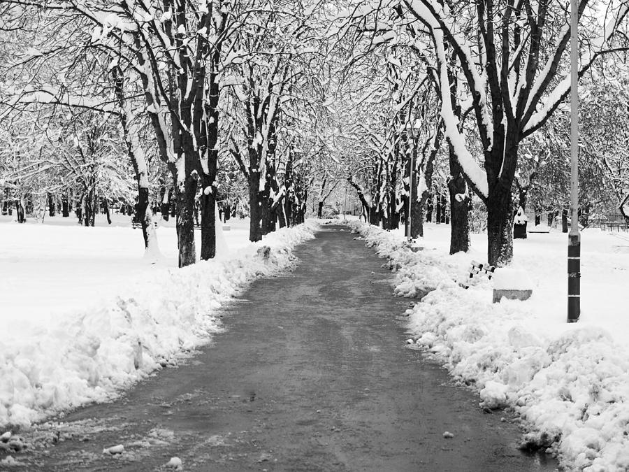 Sofia Photograph - A Winters Path by Rae Tucker