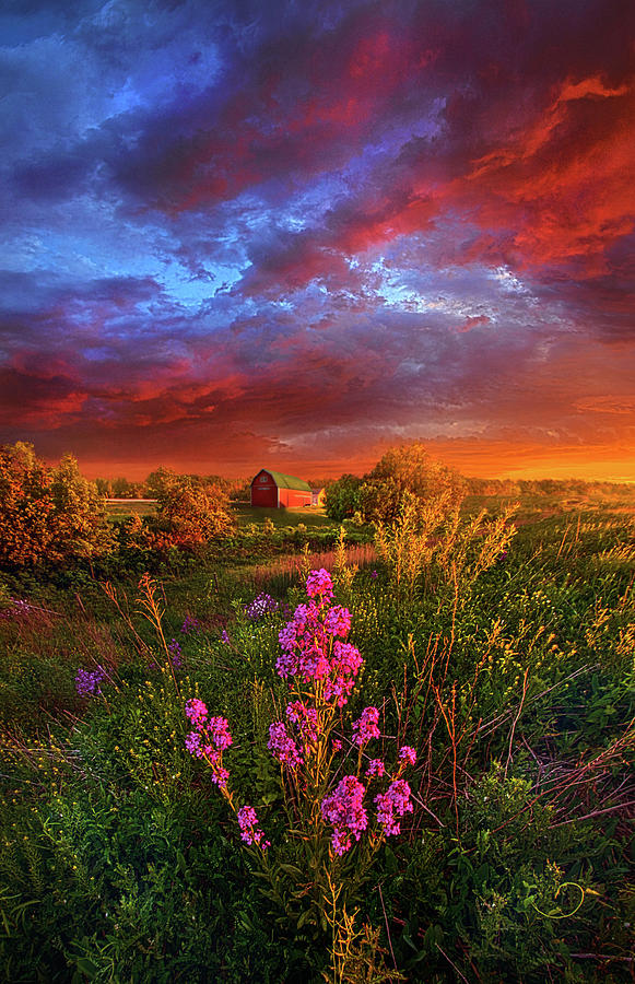 Spring Photograph - A Wisconsin Story by Phil Koch