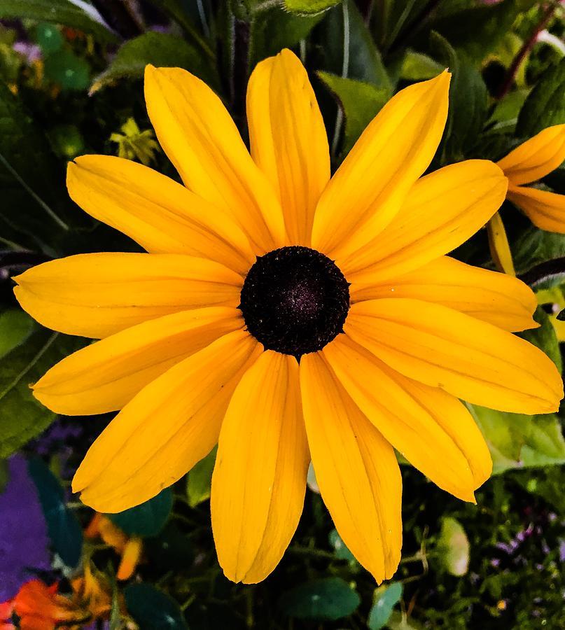 Yellow Photograph - A Yellow Beauty by Angela Sherrer