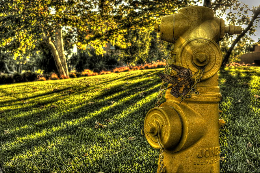 Hdr Photograph - A Yellow Hydrant by Frank Garciarubio