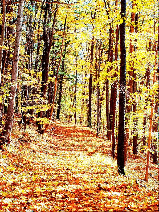 Autumn Photograph - A Yellow Wood by Joshua House