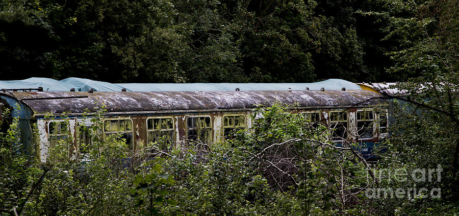 Artist Photograph - Abandoned Carriages by Tabitha Fox