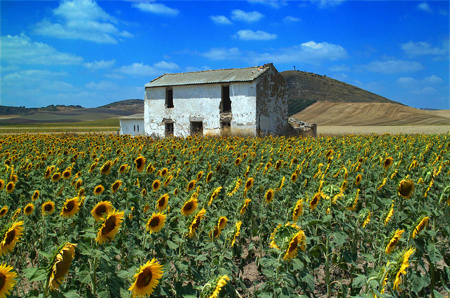 Cortijo Photograph - Abandoned Farmhouse And Sunflowers by Brian Grady