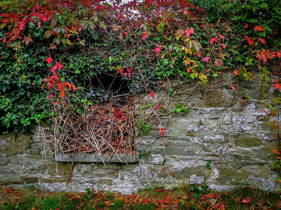 Autumn Photograph - Abandoned Irish Cottage In Autumn by James Truett