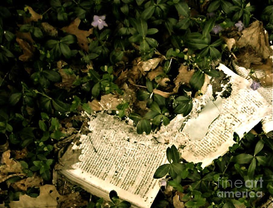 Abandoned Photograph - Abandoned Kp Book 2 by Simonne Mina