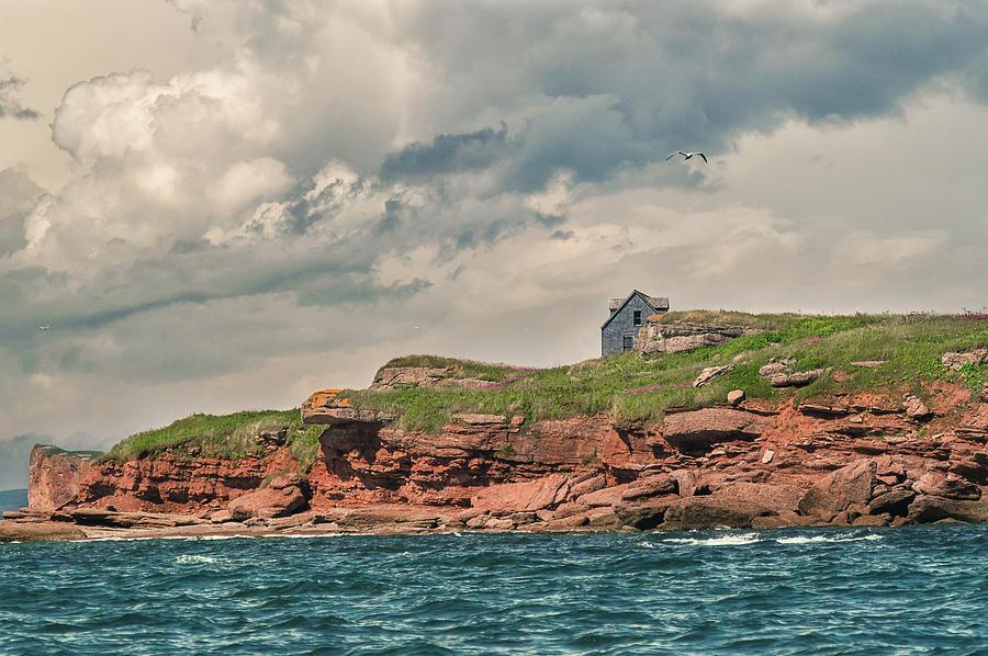 Abandoned on Bonaventure Island by Tracy Munson