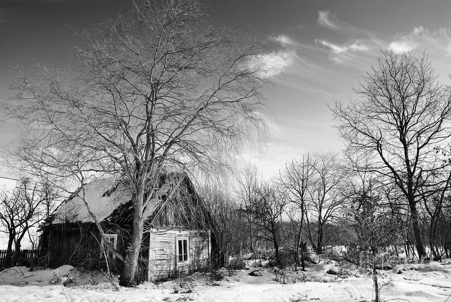 Winter Photograph - Abandoned Wooden Shack In Winter by Arletta Cwalina