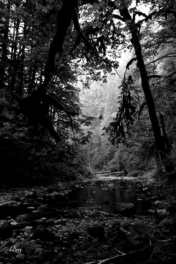 Abiqua Creekside by Douglas Berg