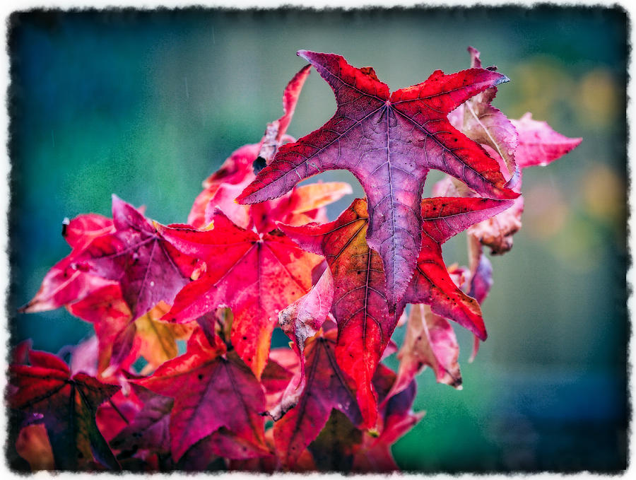 Red Photograph - Ablaze by Barb Leopold