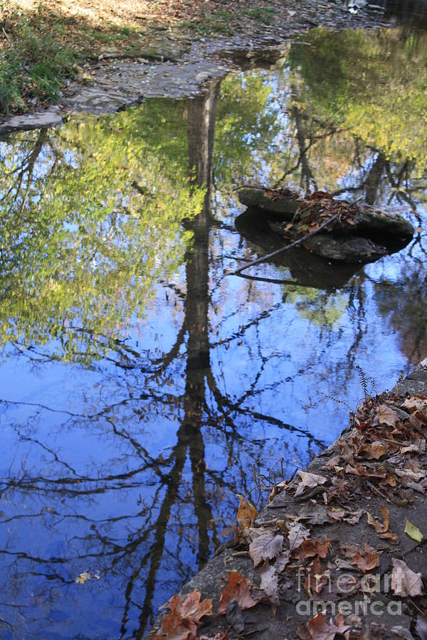 Tree Photograph - Above And Below by Monica Smith
