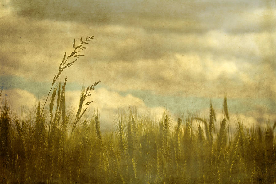 Wheat Photograph - Above It All by Rebecca Cozart