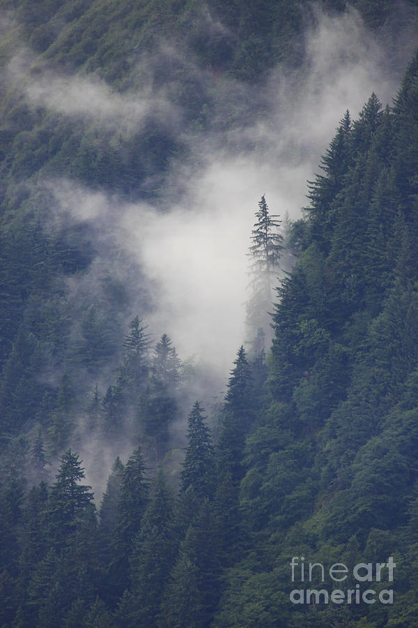 Alaska Photograph - Above Juneau by Stan and Anne Foster