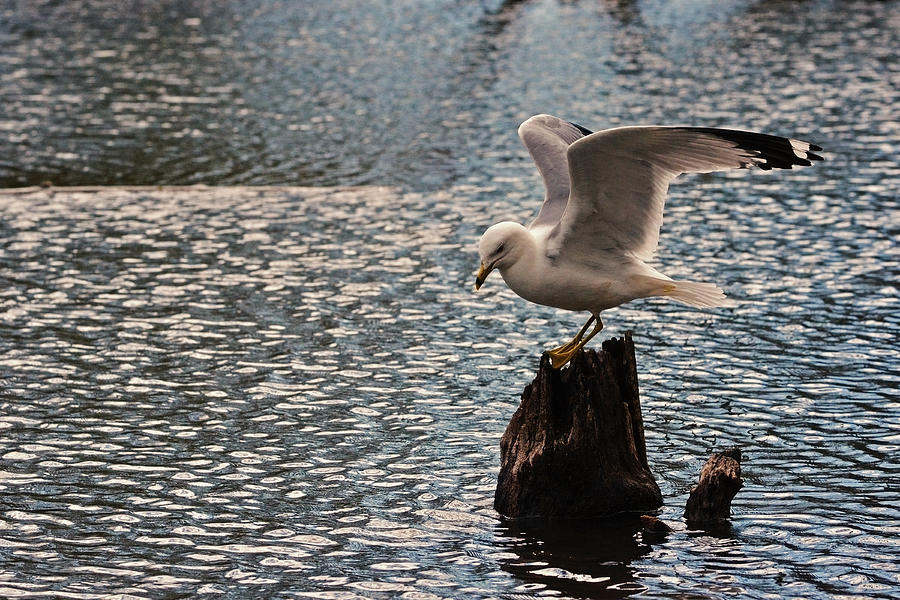 Gull Photograph - Abstract by Asbed Iskedjian